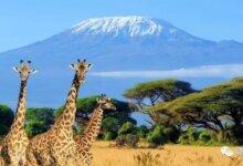 肯尼亚|神秘的非洲国度,除了看肯尼亚动物大迁徙你还能怎么玩?-留学世界 Study Overseas Global Study Abroad Programs Overseas Student International Studies Abroad